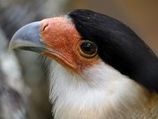 AN aves (16)