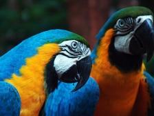 AN B aves (1)
